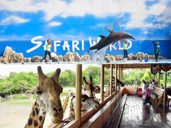 ttl-safari-world-04