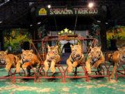ttl-srircacha-tiger-zoo-03