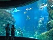 ttl-bangkok-ocean-02